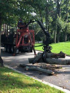 tree service removal