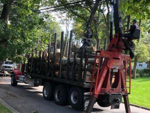 Tree Surgeon Duluth